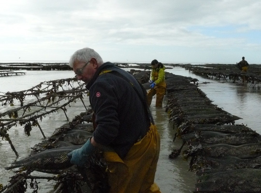 how to start an oyster farm